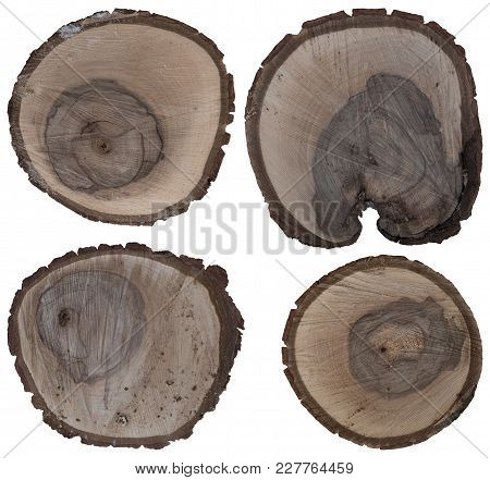 Cracked Oak Split With Bark. Isolated On A White Background.