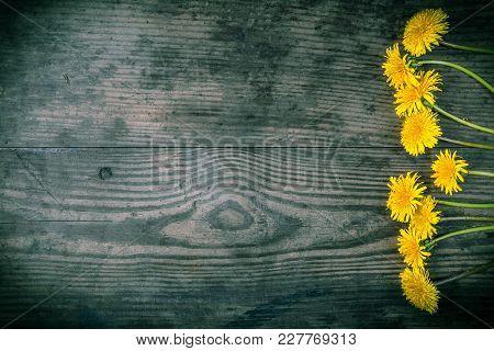 Arrangement Of Yellow Dandelions On Dark Gray Wooden Background, Space For Text