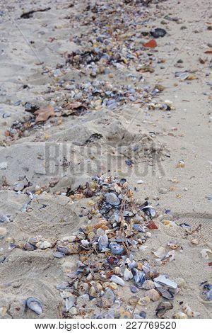 Shells On Vao Sandy Beach In Vigo, Vigo, Galicia, Spain