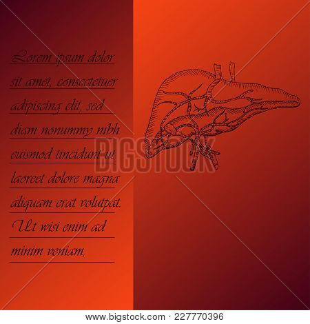 Two Section Poster About Human Liver With Place For Text. Hand Drawn Human Liver. Human Anantomy Vec