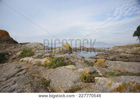 Atlantic Flora Near Samil Beach In Vigo, Vigo, Galicia, Spain