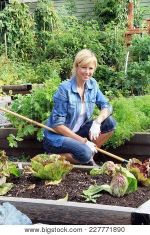 Smiling Caucasian woman gardener in her fifties, working in a community vegetable garden plot.