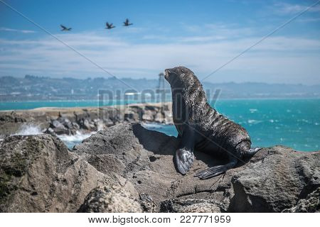 sea lion mammal in the wild, natural background, new zealand nature