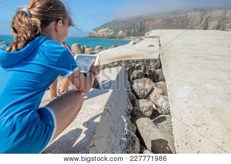 young girl taking photo of a seal lion in the wild among rocks, natural background, new zealand nature