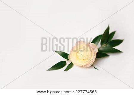 Ranunculus Flowers . Close Up Persian Buttercup Flower.