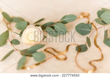 Flower Ranunculus With Eucalyptus.