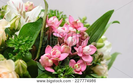 Close Up Of Rose Bush, Alstroemeria, Bouvardia And Salal In Greeting Bouquet