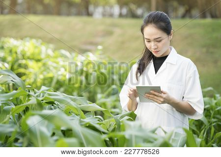 Biotechnology Woman Engineer Examining Plant Leaf For Disease, Science And Research Concept