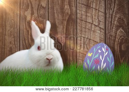 Rabbit over white background against wood panelling