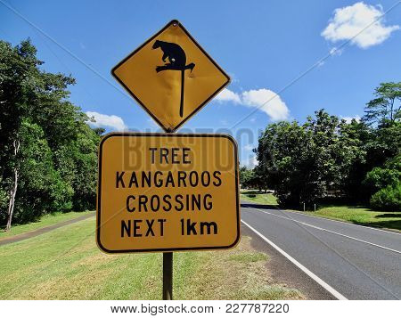 A Warning Sign To Motorist That There May Be Rare Tree Kangaroos Crossing The Road In The Next Kilom
