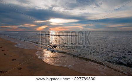 Sunrise On Driftwood At Beach In San Jose Del Cabo In Baja California Mexico Bcs