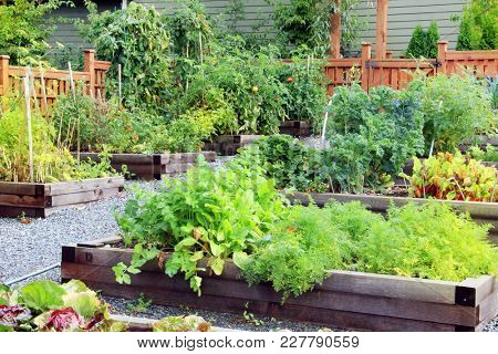 Lush and organic community vegetable, fruit and herb garden in summer.