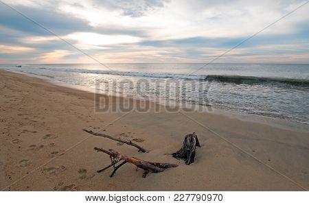 Sunrise Over Driftwood On Beach In San Jose Del Cabo In Baja California Mexico Bcs