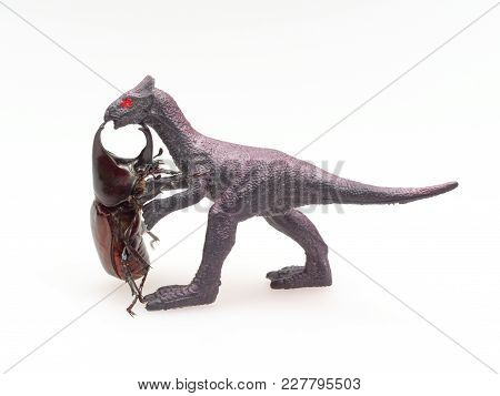 Fighting Or Rhinoceros Beetle Fighting With Black Toy Dinosaur Isolated On White Background Which Ma