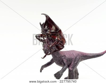 Fighting Or Rhinoceros Beetle Fighting With Neck Locking With Black Toy Dinosaur Isolated On White B