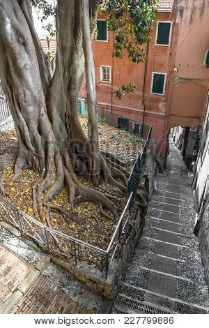 Old Tree With Big Invasive Roots Growing In The