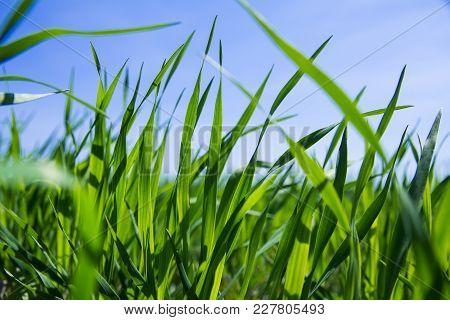 Green Grass Close Up Capture
