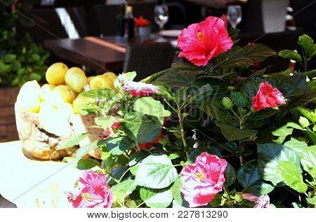 Morning Flowers And Lemons In Soller Restaurant