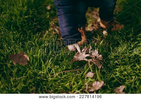 Close Up Of Legs Kid Boy In Jeans, Yellow Boots In Green Grass In Park. Child Little Feet Walking On
