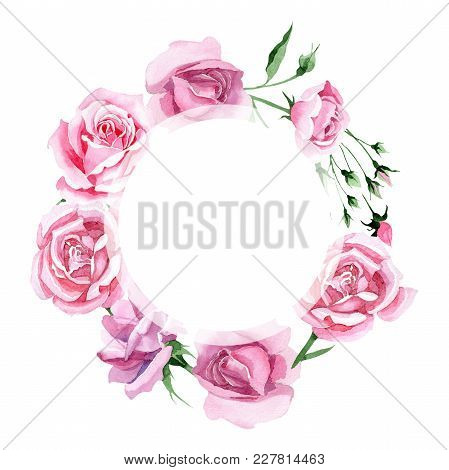 Wildflower Pink Tea Rosa Flower Wreath In A Watercolor Style. Full Name Of The Plant: Rosa, Rose, Hu