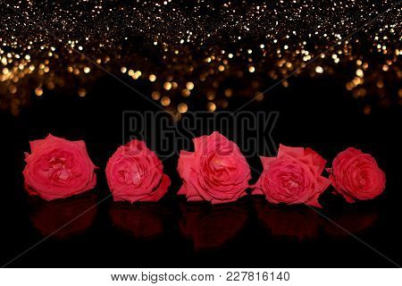 beautiful natural pink rose on a black background