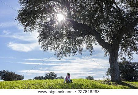 Child Girl Under Acorn Tree. Enjoying Nature For Children Concept