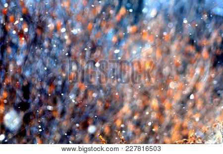 Texture Of Autumn Leaves Illuminated By The Sun With Flying Snow, Shot Without Focus