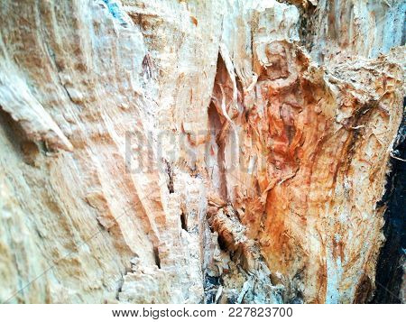 Raw And Grungy Closeup In A Tree Stump