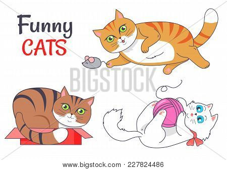 Funny Cats Sleeping In Red Box, Playing With Grey Mouse, Cute Kitten And Woolen Thread Ball Vector I