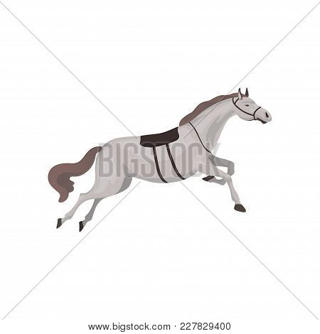 Grey Thoroughbred Horse, Equestrian Professional Sport Vector Illustration On A White Background