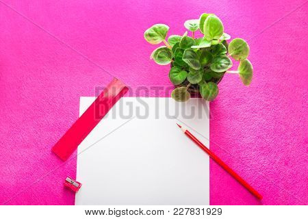 Red Pencil With Pencil Sharpener, Ruler And Indoor Plant, And White Paper Sheet On Red Background. F