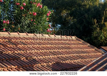 Roof Tiles, Green Trees In The Background. Old Masonry Houses