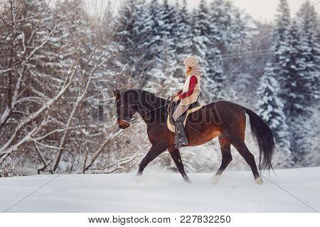 Horse. Jockey Girl Rider Rides Brown Horse Through Winter Forest In Snow. Concept Walk In Farm.