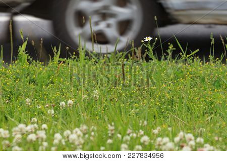 A Fragment Of A Summer Lawn Against The Background Of A Roadway.