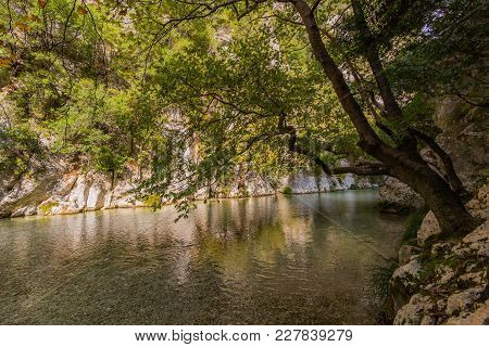 Natural Tree Hanging In Acheron River In Greece, Water And Green Vegetation
