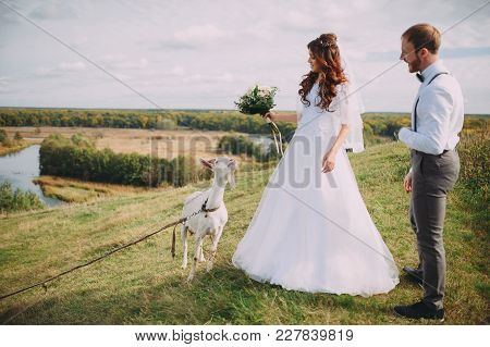 Two White Goats In The Image Of The Bride And Groom