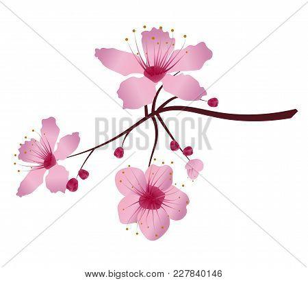 A Twigs Sakura Cherry Blossoms. Pink Cherry Flower Blossom Branch, Peach Bloom, Sakura Branch. Bloom