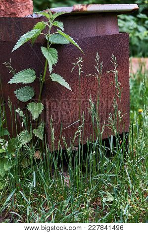 Rusty Brazier Standing In Tall Grass And Nettles
