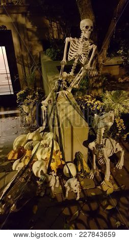 Skeleton Dog Walker And With Dog Skeletons, Halloween Decoration, Spooky, Creative, Haunting, Myster