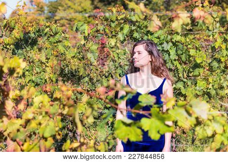 Elegant Young Woman In Blue Velvet Dress By Vineyard Winery Grapevine Leaves Green Rows In Virginia