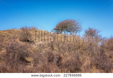 Tree On A Dune Top Formed By The Wind In A Typical Dutch Dune Landscape That Is Part Of The Zuid Ken