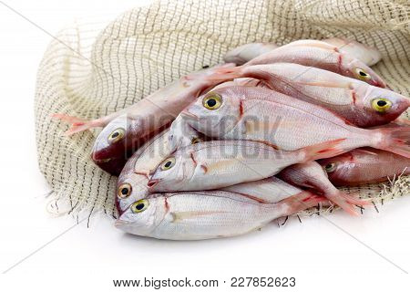 Fresh, Caught, Raw Fish Lithrini (pagellus Erythrinus) On A White Background Close-up.