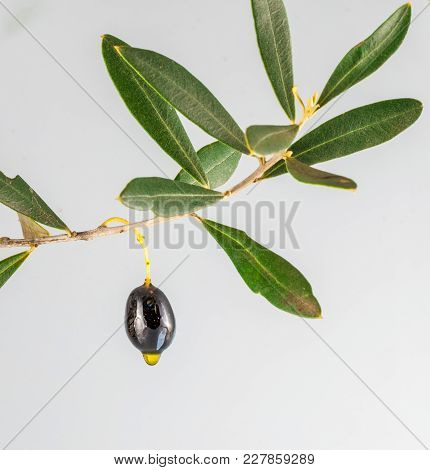 Isolated Black Olives And Olive Oil Drop On White Background