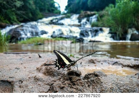 Swallowtail Butterfly On The Ground In Front Of A Waterfall