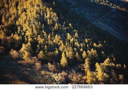 Autumn Background Of An Autumn Forest Pattern On A Mountain Slope In The Rays Of A Setting Sun In Ye