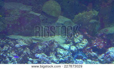 Aquarium, Fish Tank, Coral Reef Animals Nature