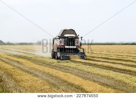 Russia, Poltavskaya Village - September 27, 2015: Rice Harvesting By The Combine. Autumn Harvesting