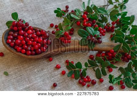 Berries Of Red Lingonberry In A Wooden Spoon, Along With Twigs, On A Table.