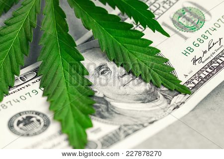 Money Sheet Of Marijuana, Cannabis Close-up. Concept Of Drugs, Medicine, Business, Violation Of Law