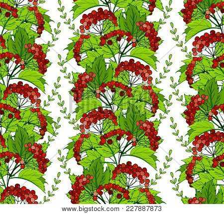 Seamless Pattern With Viburnum Berries And Foliage. Vector